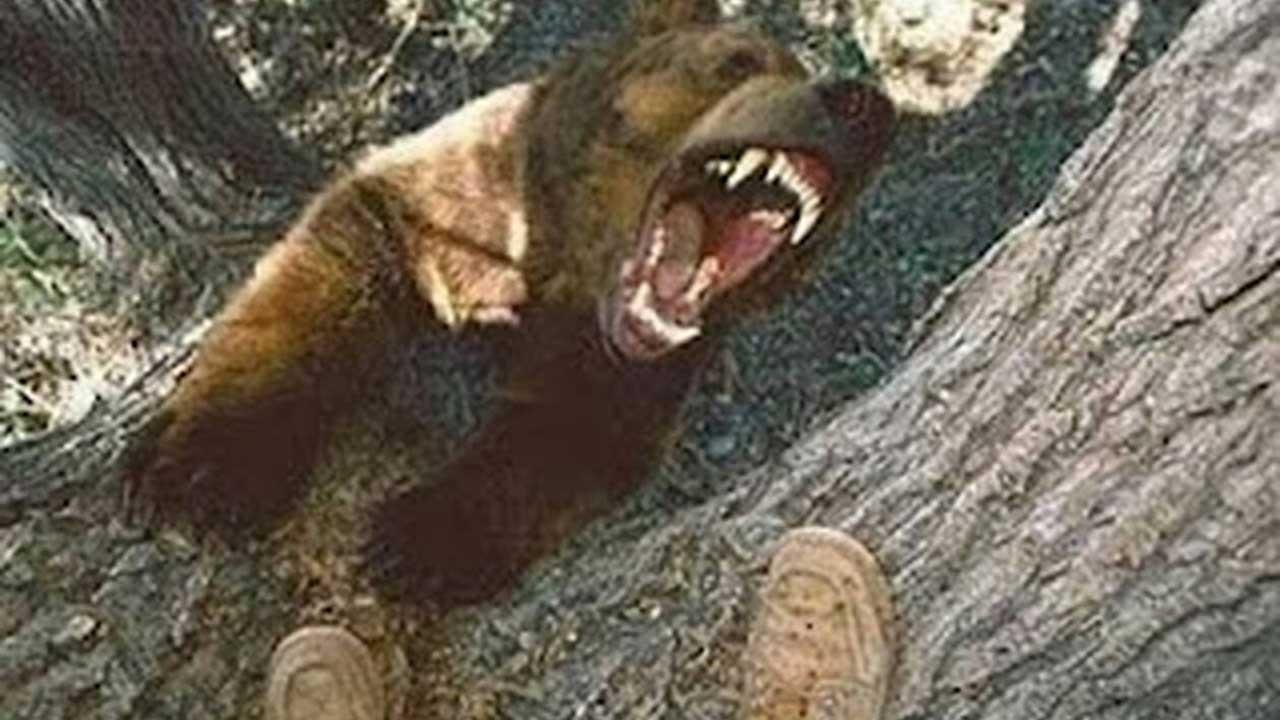 ayılar ağaca tırmanır mı
