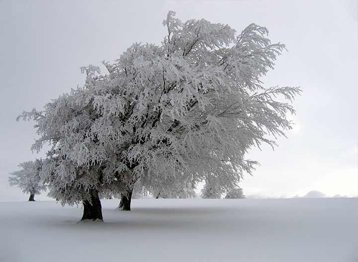 ıslak kar