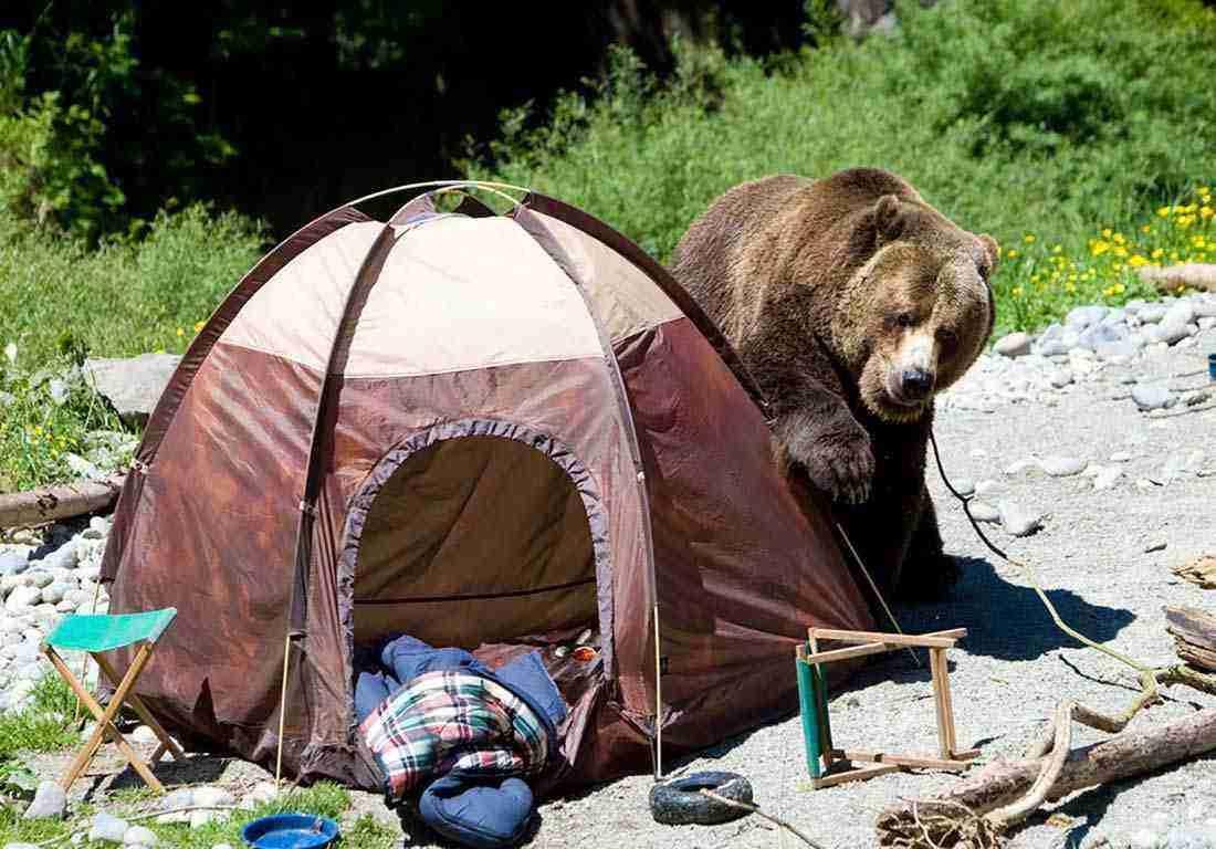 Kamp alanında ayı