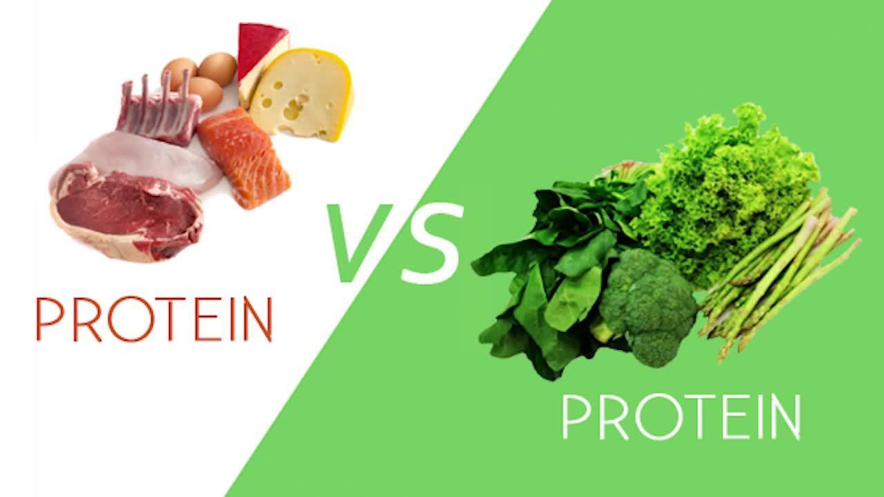 Hayvansal bitkisel protein