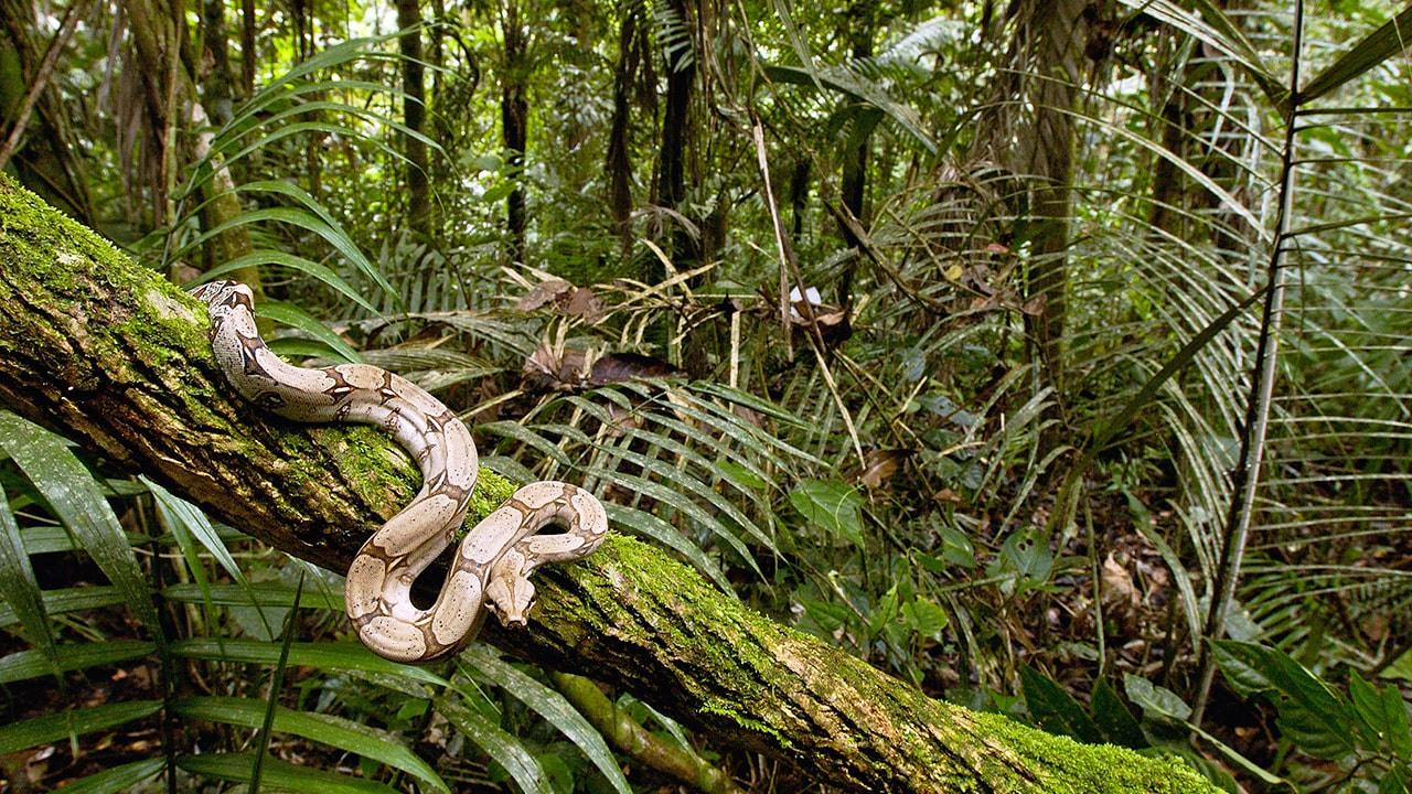 ağaçta yılan