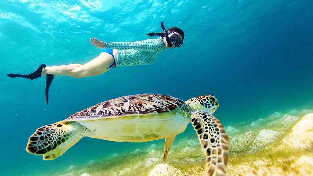 şnorkelle yüzme