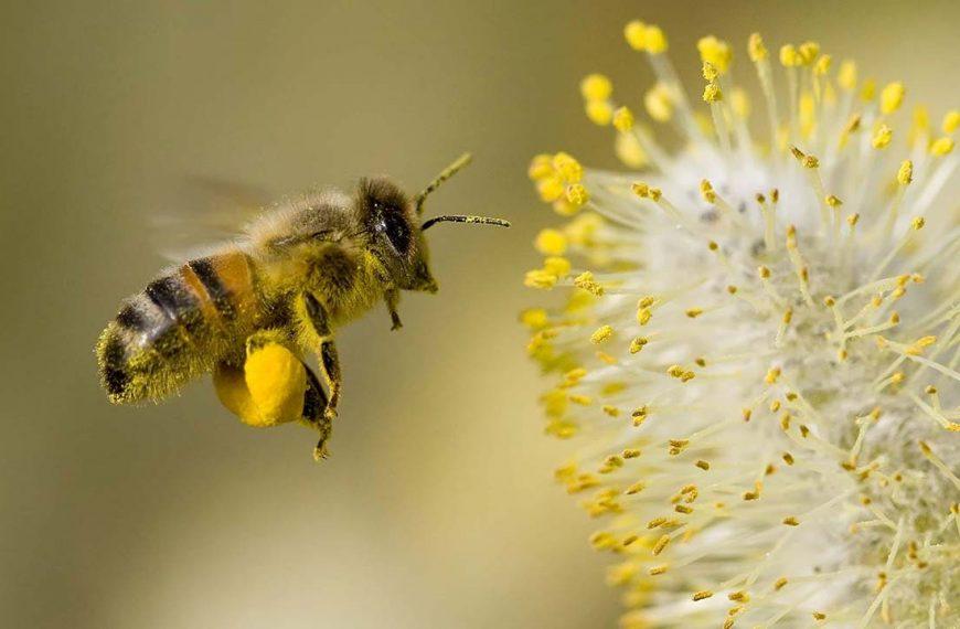 Alerji ve astıma neden olan polenler ne zaman biter?