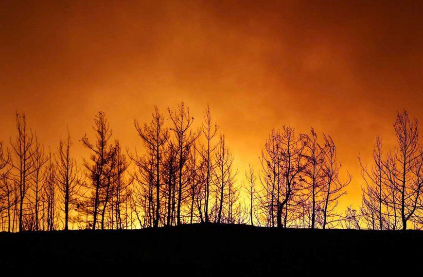 Birçok İlde Orman Girişleri Yasaklandı