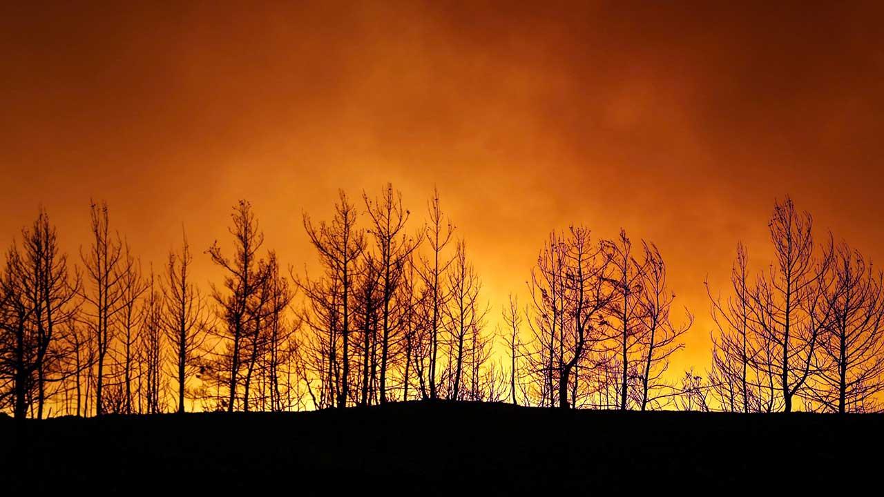 Orman yangını yasak